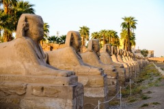 Avenue of sphinxes.