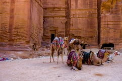 Camels lounging in the shade within the lost city.