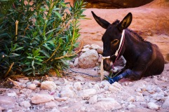 A donkey lounging in the shade and most likely waiting on his master to finish a long day of work in the sun.